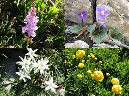 ピレネーの花々