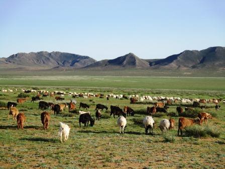 モンゴル大草原