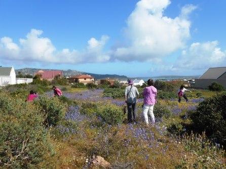 南アフリカツアー