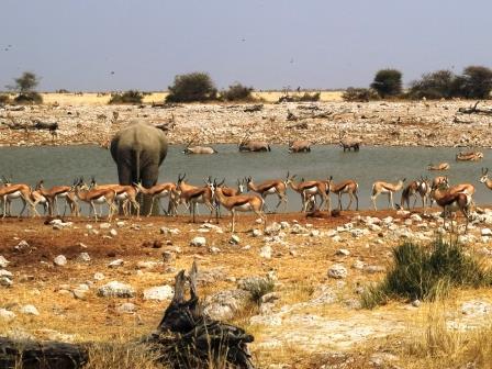 ナミビアツアー