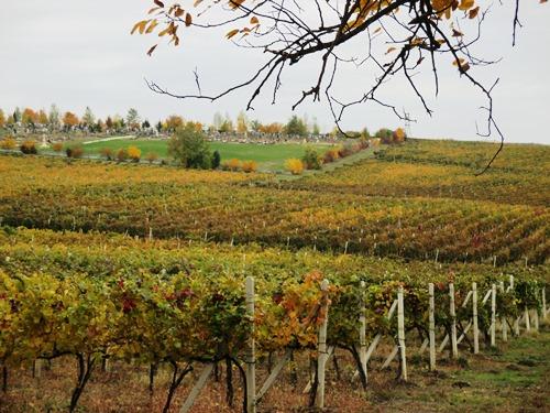 秋色に染まるブドウ畑