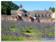 フランス、シトー派のセナンク修道院