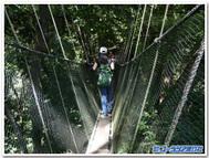 キナバル国立公園のキャノピーウォーク