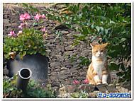 南西フランスコンクの猫