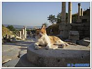 トルコ、エフェソスの猫