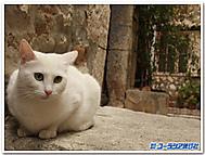南仏エズの猫