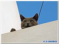 ギリシャ、ナクソス島の猫