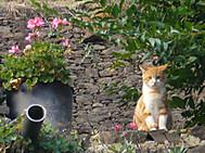 フランス、コンクで見かけた猫