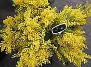 ミモザの花(イメージ)