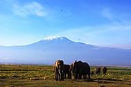 Amboseli_3