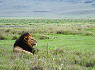 Ngorongoro_3